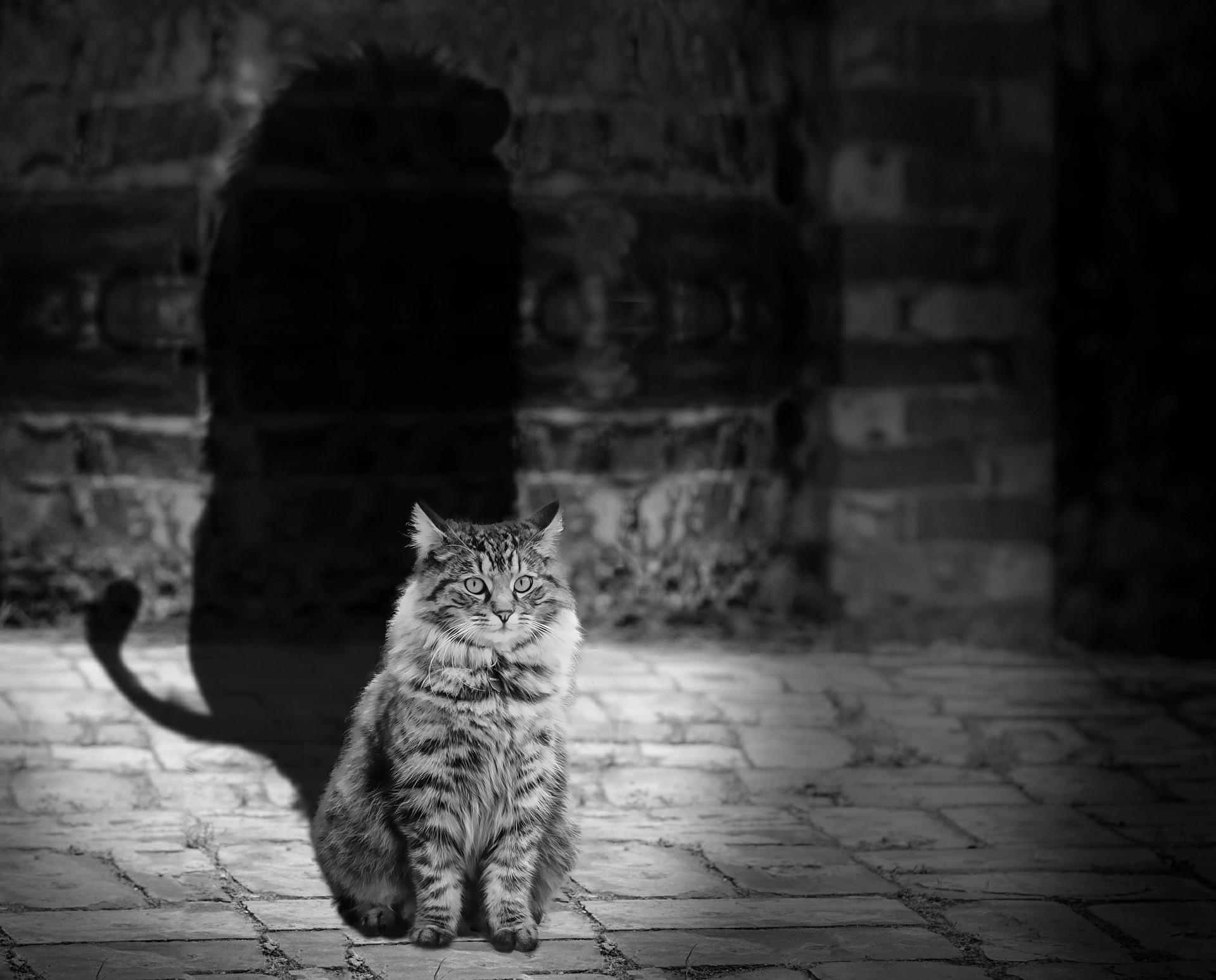 Defeating the predators – a seminar on responsible publishing